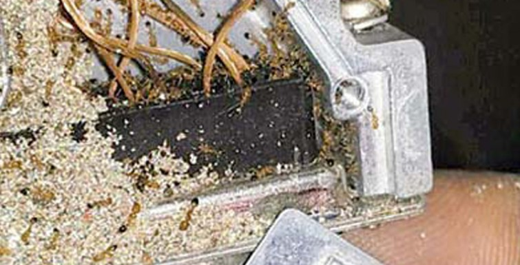 Mumbai: Ants Chew Up Brake Cables in Train