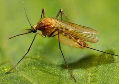 Setting a Baseline: A Clearer View of Mosquito Resistance to Insecticides