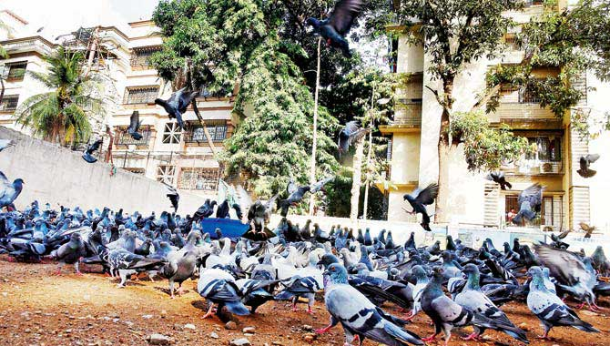 Mumbai:53 year old woman dies of lung infection from fungi in pigeon droppings